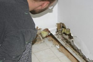 Mold Issue In House Mold Inspectors Dont Know Source