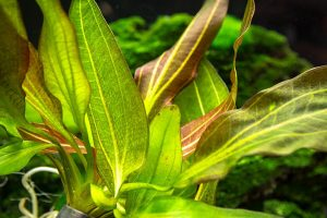 Things That You Need To Know While Adding Live Plants To The Aquarium